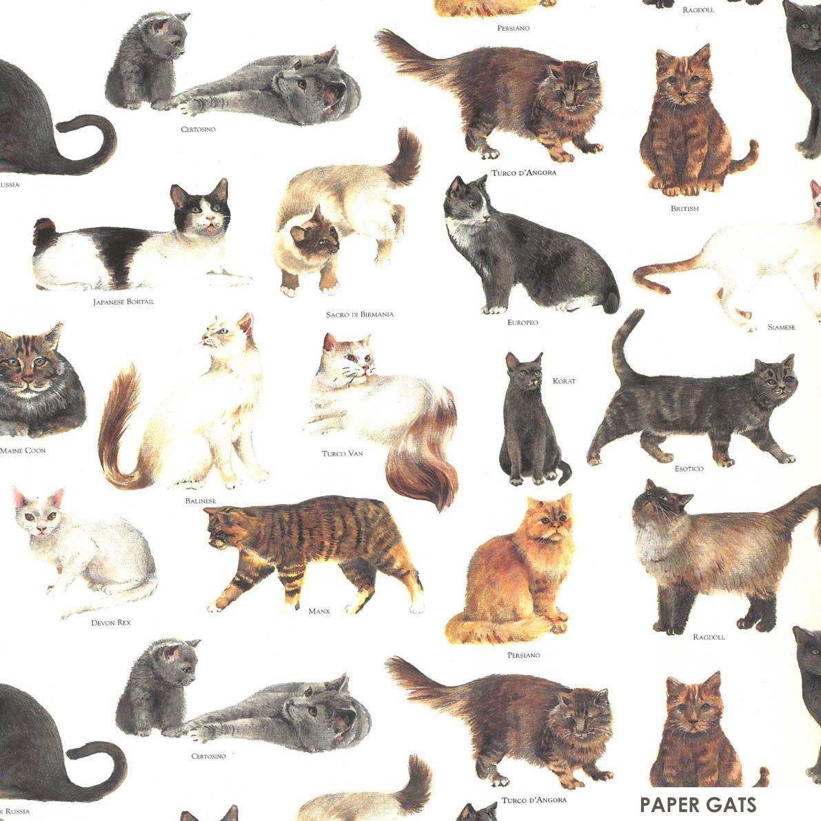 Paper gats